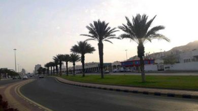 Photo of أمانة العاصمة المقدسة تزرع 3000 شتلة بطريق المسجد الحرام